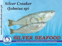 Silver Croaker  (Johnius Sp)