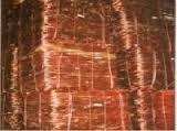 Copper Scrap( LDPE)