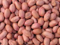 Export Quality Peanuts For Sale And Export