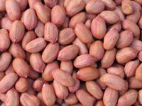 Export Quality Peanuts