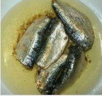sardine in oil