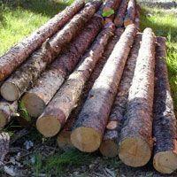 Pine Wood Logs