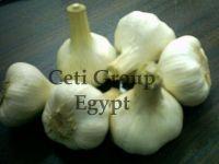 egyptian white garlic