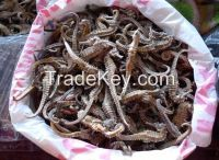 DRIED SEAHORSE TOP QUALITY