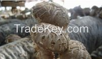 Wild Mushrooms,Frozen & Dried Mushrooms , Truffles & Fungus