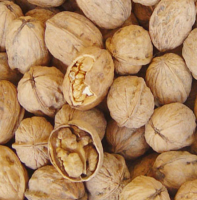 Inshell and shelled Walnuts
