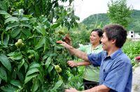 High Quality Shelled Walnut Xinjiang Supply