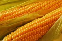 Well Refined Factory Edible Corn Oil