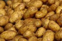 High Quality Fresh Potatoes