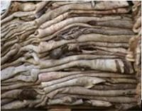 Wet Salted Cow Hides And Other Skins