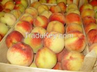 Fresh Peaches growers, Apricot Suppliers, Pears, Avocado, Mango, Pineapple, Water Melon