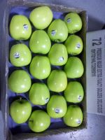 FRESH APPLES/ GRANNY SMITH, GALA, GOLDEN DELICIOUS/ Suppliers, Exporters