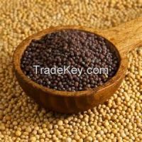 Top Quality Mustard Seed