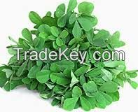 High  quality  Fenugreek