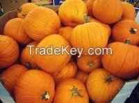 High  quality  Fresh Pumpkin