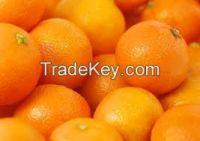 High  quality    oranges
