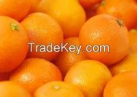 High  quality  fresh orange