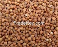 High  quality buckwheat grain