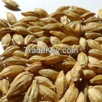 High  quality  Barley brans