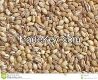 High quality  pearl barley