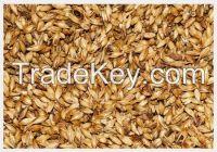 High  quality  Feed Barley