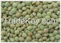 High quality Green Lentils