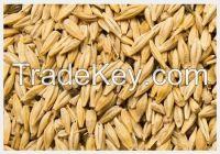 High   quality  Barley Malt for Making Beer