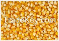 High  quality  Prime Maize