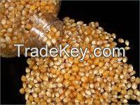 High  quality  kernels popcorn
