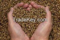 High   quality Hemp Seed