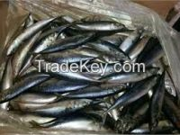 High  quality mackerel 200-300g