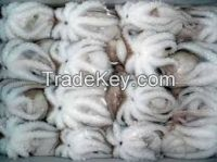 frozen baby octopus whole