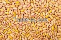 High quality  Yellow Kidney Beans