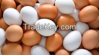 High  quality   WHITE/BROWN SHELL EGG