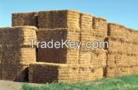High  quality  alfalfa hay