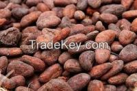 High  quality  COCOA BEANS (Best Quality)