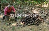 High  Brazil Nuts