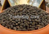 High  quality  jatropha  seeds