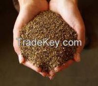 High  quality  Forage Grass Seeds