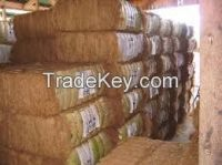 High  quality  COCONUT FIBER