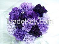 High  quality  fresh cut carnations