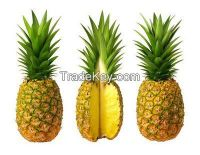 High  quality   Fresh Pineapple