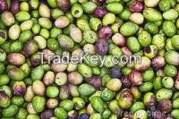 High  quality  Fresh Olives