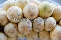 High  quality  FRESH LONGAN