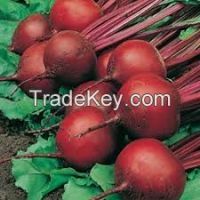 High  quality  Best price Red Beet Root