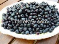 High   quality  Bilberry p. e.