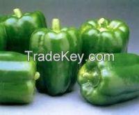 High quality   Fresh Capsicum - Bell Pepper