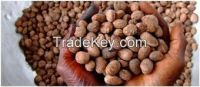 High  quality   karite nuts