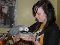 live parrot birds