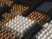 Fresh Egg and Egg products